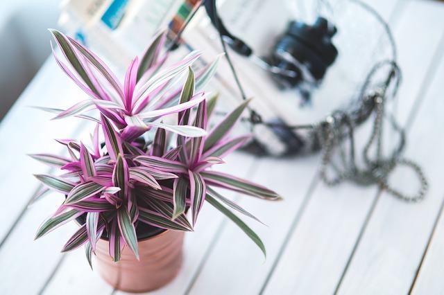 růžová rostlina