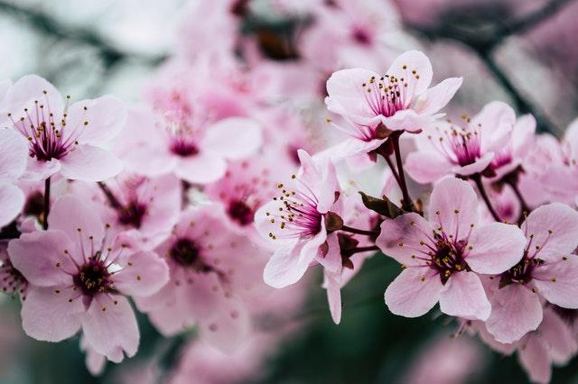 rozkvetlé květy na stromě